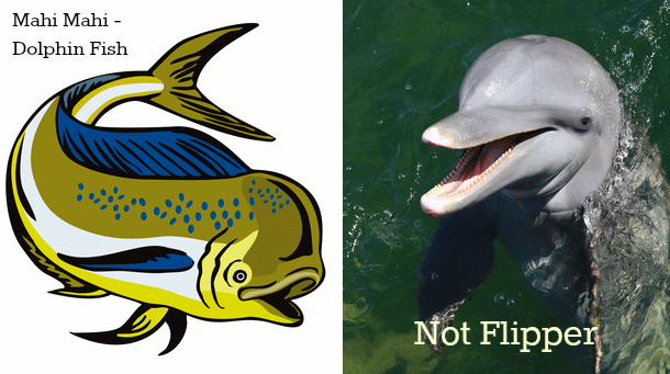 Dolphin and Dolphin Fish