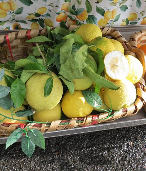 Amalfi Coast Lemons