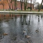 Boomer Travel | Bydgoszcz, Poland | River Brda and ducks