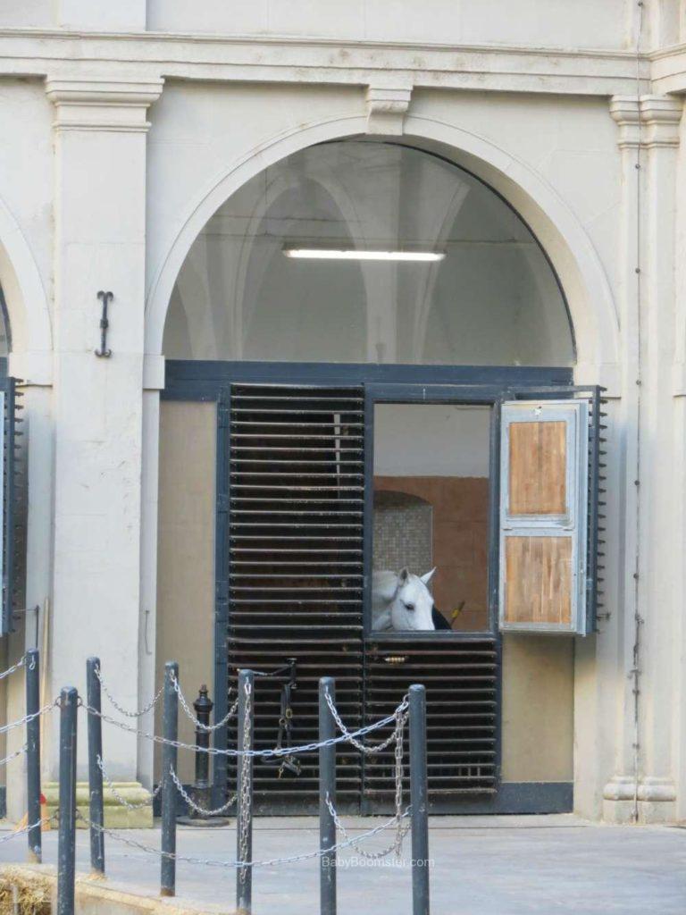 Baby Boomer Travel | Austria | Vienna - Lipizzaner Stallion