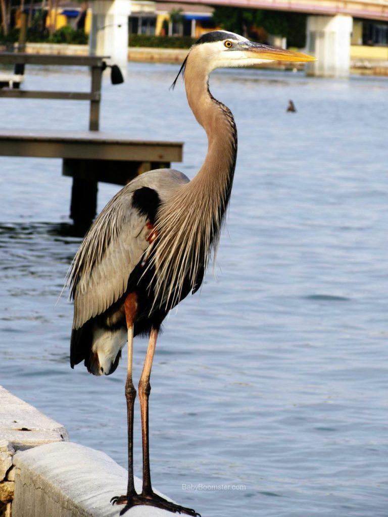 Boca Ciego Bay, Florida