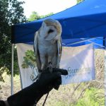 Earth Day Walk | Chatsworth, CA | White Owl