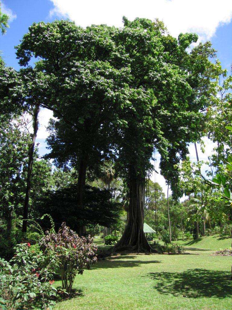 Baby Boomer Travel | Caribbean | St Vincent - Botanical Gardens