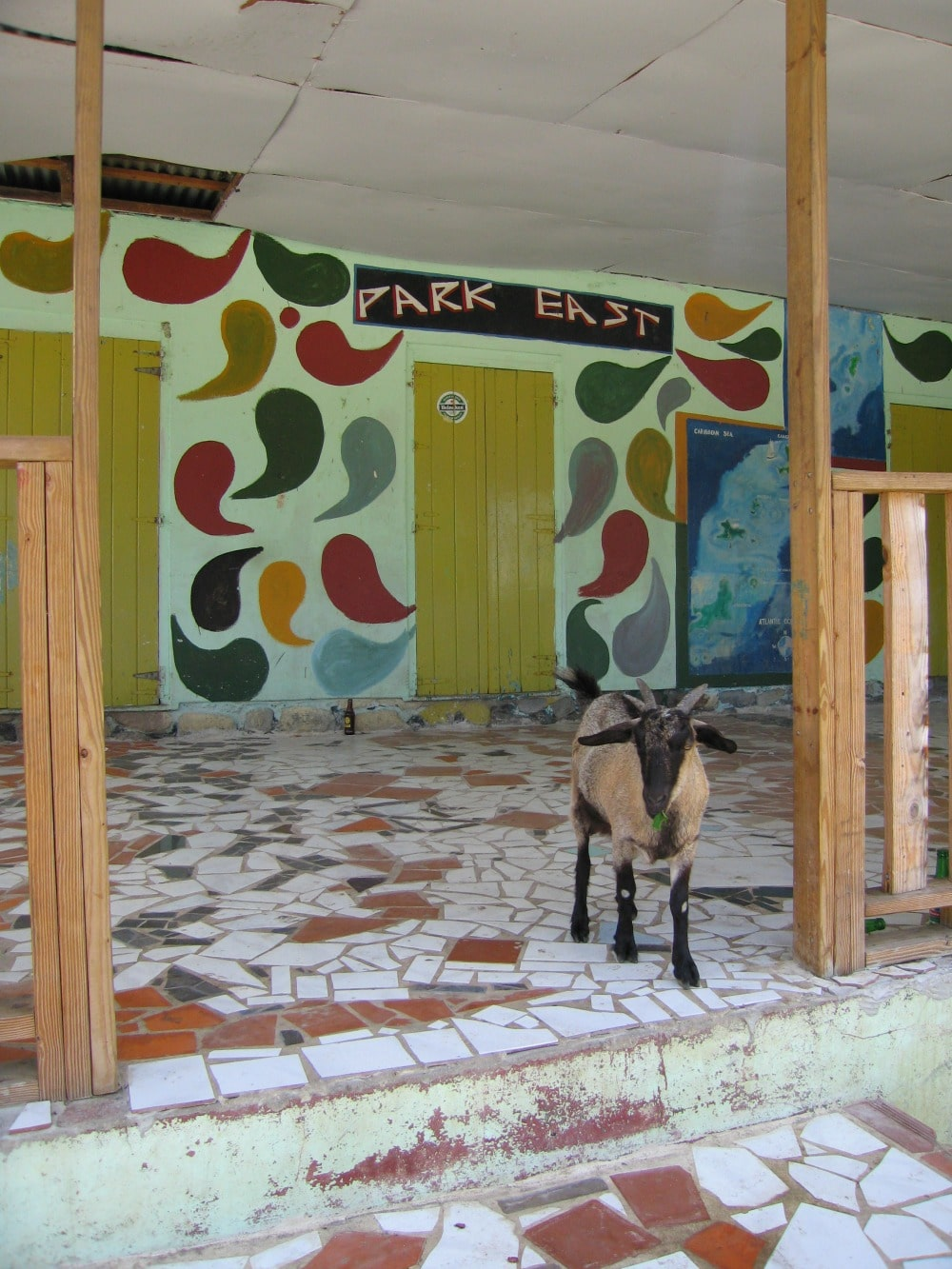 A goat on Union Island in the Grenadines