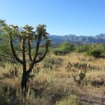 Baby Boomer Travel | Arizona | Miraval - Sonoran Desert - Tucson