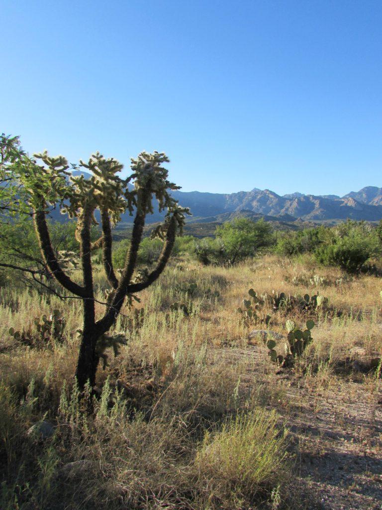 Baby Boomer Travel | Arizona | Miraval - Sonoran Desert - Tucson