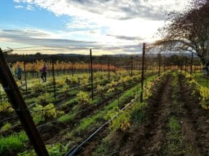 Baby Boomer Travel | Napa, California | Backyard Vineyard Mid Napa Valley