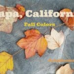 Napa in Autumn – California's Wine Country Fall Colors