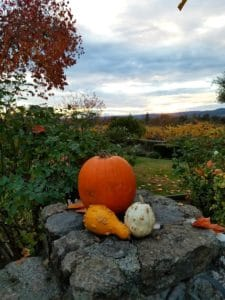 Baby Boomer Travel | Napa, California | Pumpkin - Fall Colors - Mid Napa Valley