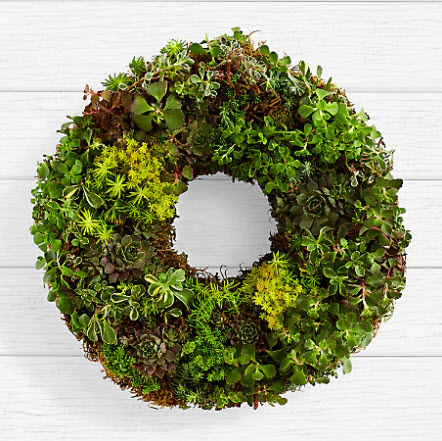 Living Succulent Wreath by Pro Flowers