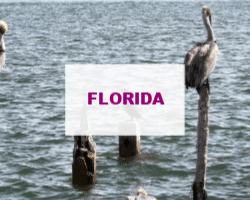 Posts about Florida #travel #boomertravel #babyboomers