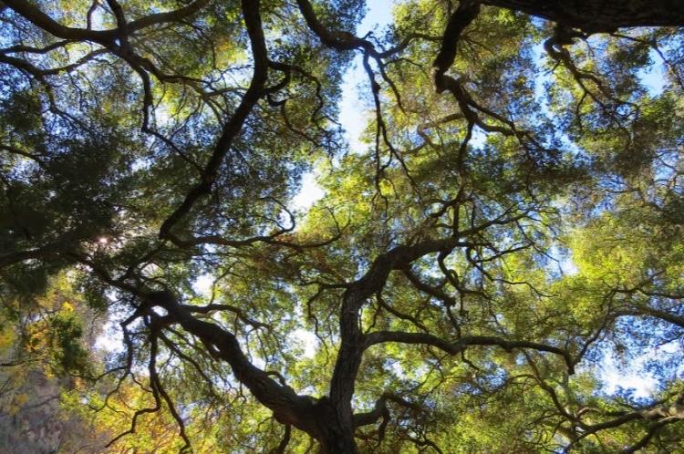 Sunshine glowing through the trees in the Malibu Hills, California #sunrays #trees #sky