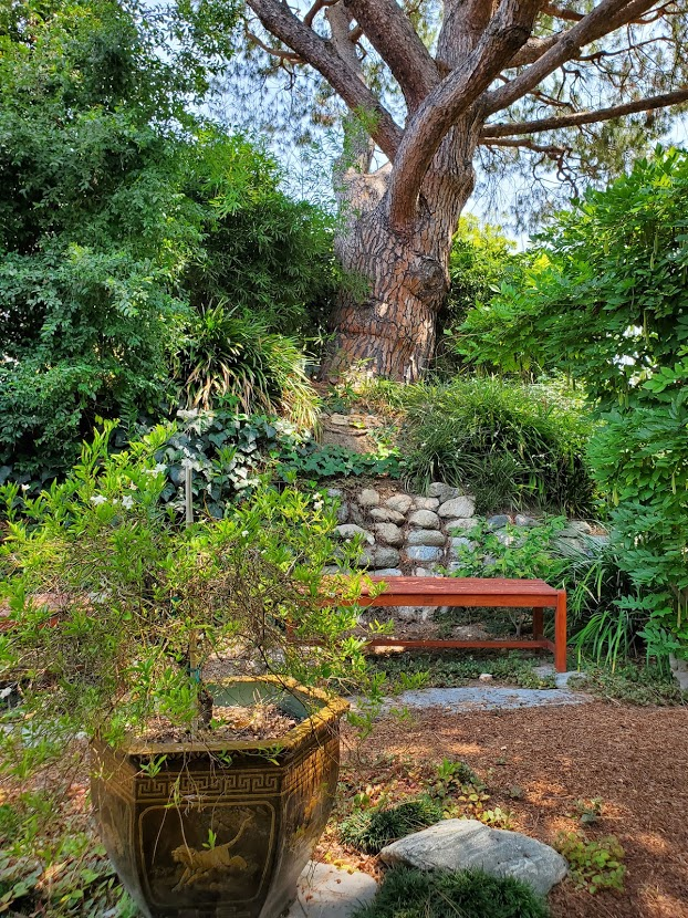 Mother Center Tree and Bench SRF